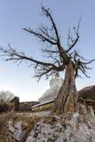 Pijnboom en cipres Stock Foto