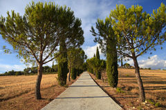 Pijnboom en cipresbomenrijen en landweg, landelijk landschap, T royalty-vrije stock foto's