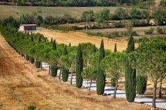 Pijnboom en cipresbomenrijen en landweg, Toscanië, Italië royalty-vrije stock fotografie