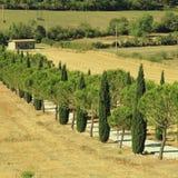 Pijnboom en cipresbomenrijen en landweg, Toscanië, Italië royalty-vrije stock afbeelding