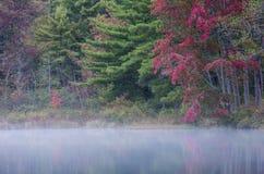 Pijnboom en Esdoorn Clash Colorfully In Autumn stock foto