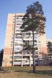 Pijnboom en het gebouw Royalty-vrije Stock Foto