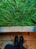 Pijnboom en hout Royalty-vrije Stock Foto's