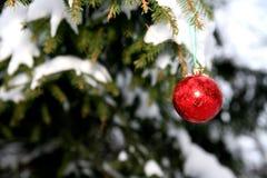 Pijnboom en Kerstmisbal Royalty-vrije Stock Fotografie