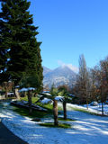 Pijnboom en palmen tegen duidelijke blauwe hemel en bergen in Zwitserland stock foto's