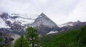 Pijnboom en sneeuwbergen Stock Fotografie