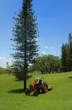 Pijnboom en tractor stock afbeelding