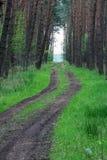 Pijnboom Forest Road royalty-vrije stock foto's