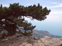 Pijnboom het groeien op een rots boven de stad en het overzees Royalty-vrije Stock Afbeeldingen