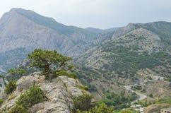 Pijnboom hoog op een berg Stock Afbeeldingen