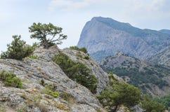 Pijnboom hoog op een berg Stock Foto's