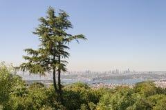 Pijnboom Istanboel Turkije Royalty-vrije Stock Foto