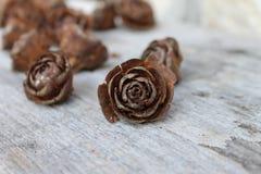 Pijnboom-kegel het bloeien Royalty-vrije Stock Afbeeldingen