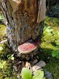Pijnboom met paddestoel royalty-vrije stock afbeeldingen