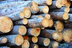 Pijnboom om hout Stock Fotografie