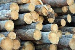 Pijnboom om hout Royalty-vrije Stock Afbeeldingen