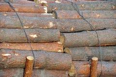 Pijnboom om hout stock afbeelding
