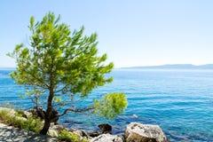 Pijnboom op de promenade van Brela in Makarska Rivier, Biokova-bergen in de rug Stock Foto