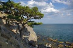 Pijnboom op de rand van een klip stock afbeelding