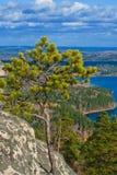 Pijnboom op de rots royalty-vrije stock foto
