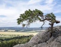Pijnboom op de rots Royalty-vrije Stock Afbeelding
