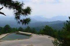 Pijnboom op een achtergrond van bergen Stock Foto