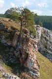Pijnboom op een rots Stock Afbeeldingen