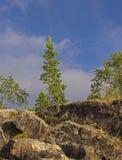 Pijnboom op een rots. Stock Fotografie