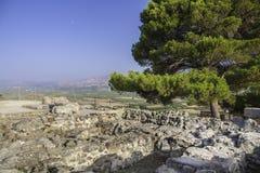 Pijnboom op Festos-ruïnes royalty-vrije stock afbeeldingen
