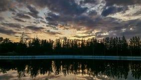 Pijnboom op het meer Royalty-vrije Stock Afbeeldingen