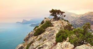 Pijnboom op rots in de Krim, de Oekraïne Royalty-vrije Stock Afbeeldingen