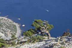 Pijnboom over het overzees. Stock Fotografie