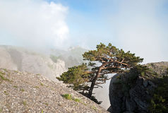 Pijnboom in rotsen, wolken bij bovenkant Stock Afbeelding