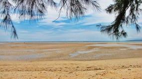 Pijnboom, zand en overzees Stock Afbeelding