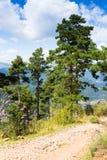 Pijnboombomen bij bergen Stock Foto's