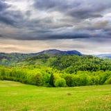 Pijnboombomen dichtbij bos en vallei in bergen Royalty-vrije Stock Afbeeldingen