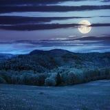 Pijnboombomen dichtbij bos en vallei in bergen bij nacht Stock Foto