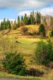 Pijnboombomen dichtbij vallei in bergen op helling onder hemel met Stock Afbeeldingen