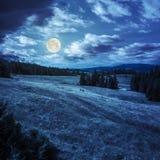 Pijnboombomen dichtbij vallei op berghelling bij nacht Stock Foto's