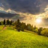 Pijnboombomen dichtbij vallei op berghelling bij zonsondergang Royalty-vrije Stock Foto's