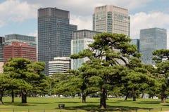 Pijnboombomen die in park in centraal Tokyo groeien Stock Foto's