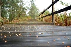 Pijnboombomen en bladeren met natte weg Stock Afbeelding