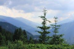 Pijnboombomen en een mening aan de bergen in Oostenrijk royalty-vrije stock fotografie