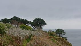 Pijnboombomen en struiken op de klippen langs de Noordzeekust van howth, Ierland royalty-vrije stock foto