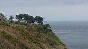 Pijnboombomen en struiken op de klippen langs de Noordzeekust van howth, Ierland stock foto's