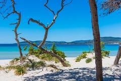 Pijnboombomen en wit zand in Maria Pia-strand royalty-vrije stock afbeeldingen