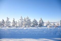 Pijnboombomen langs Fenceline in Sneeuw royalty-vrije stock fotografie