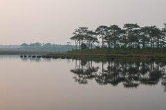 Pijnboombomen langs het reservoir Stock Fotografie