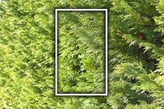 Pijnboombomen Leeg Frame voor bericht of reclame royalty-vrije stock foto