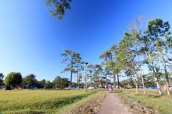 Pijnboombomen met duidelijke blauwe hemel Stock Fotografie